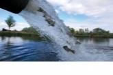 Молодь пеляди, белого амура и толстолобика выпустили в водоемы Новосибирской области