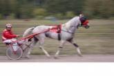 Официальные спортивные соревнования возобновляются в Новосибирской области