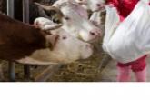 Региональная ветеринарная служба за год выявила 1 млн случаев несоответствия продукции требованиям пищевой безопасности