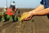 Более 60% кредитов на проведение весенней посевной кампании в Новосибирской области выданы на льготных условиях – Россельхозбанк