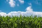 Новосибирская область намерена отдать до 100 тыс. га под «карбоновые фермы»