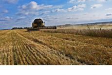 Аграрии убирают с полей Новосибирской области тритикале и вику