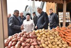 Ордынский производитель картофеля может стать поставщиком сырья для нового завода по производству снеков