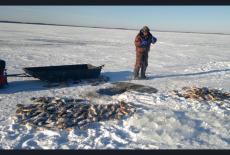 Новосибирскую рыбу распробовали в Европе