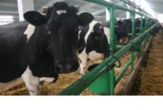 Больше двух тысяч животноводческих помещений в регионе отремонтированы для приема скота на зимнее содержание