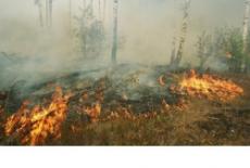 Министерство природных ресурсов напоминает жителям региона о соблюдении правил пожарной безопасности в лесах