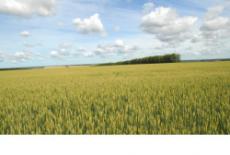 Аграрии региона соберутся на День поля Новосибирской области