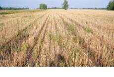 В шести районах Новосибирской области введен режим чрезвычайной ситуации в связи с засухой