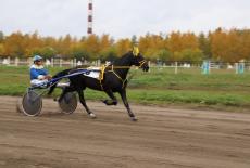 Новосибирский жеребец Коленкор выиграл заезд на Кубок Губернатора Новосибирской области