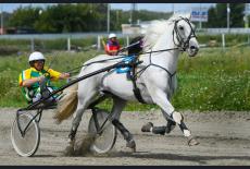 Масштабные конноспортивные соревнования пройдут в Новосибирской области