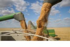 Новосибирская область впервые экспортировала рыжик и горчицу