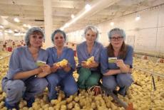 Россельхозбанк выпустил карты с индивидуальным дизайном для птицефабрики «Посевнинская»