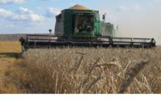 Аграрии Новосибирской области завершили уборочную кампанию, собрав почти 2,7 млн тонн зерна