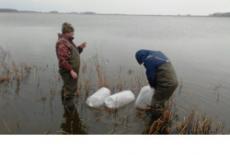 Рост добычи рыбы на 20% ожидается в Новосибирской области в 2018 году