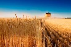 Зерно на экспорт: время пришло