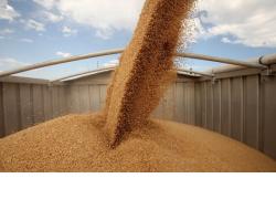 Новосибирская область отправила более 600 тысяч тонн зерна по России и странам зарубежья с начала года