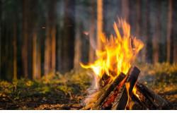 Минприроды региона призывает жителей Новосибирской области не разводить костры в лесах на майские праздники