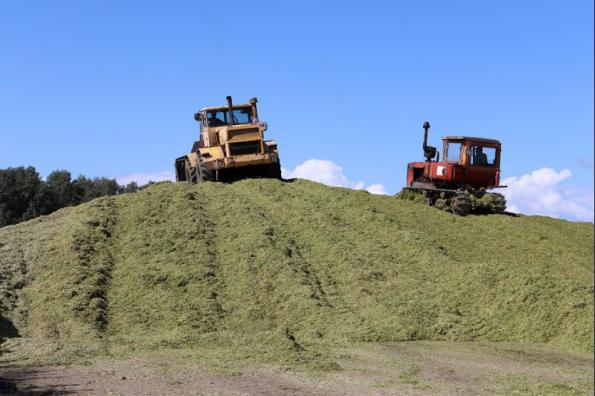 Опережающими темпами идет заготовка кормов на зимний период в регионе