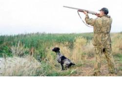 Порядка 500 рейдов по пресечению случаев незаконной охоты провели охотинспекторы регионального минприроды с начала года