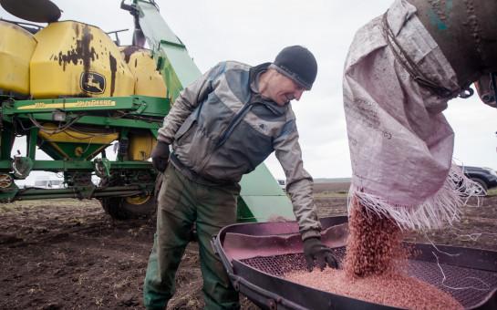 Аграрии Новосибирской области полностью обеспечены семенами к предстоящей посевной