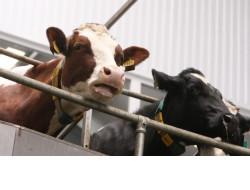 Новосибирская область вышла в лидеры по объемам производства молока в стране