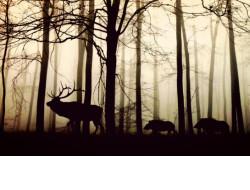 В 8 раз больше средств за год удалось взыскать с нарушителей за ущерб объектам животного мира