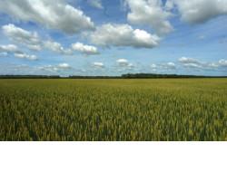 Новосибирские аграрии одними из первых в стране начали оформлять меры господдержки в электронном виде