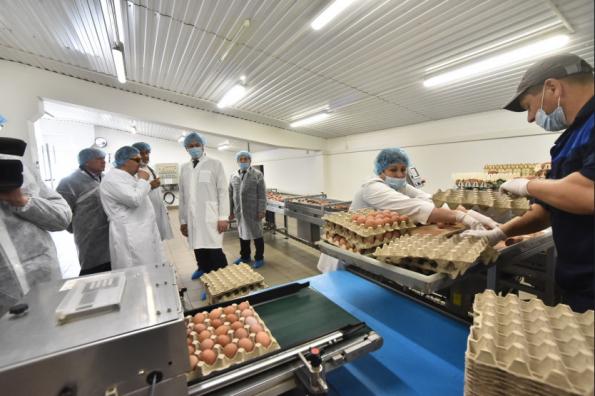 «Каргатская птицефабрика» успешно решает задачу импортозамещения при производстве продукции