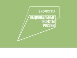 Леса Новосибирской области обследуют из космоса в рамках нацпроекта