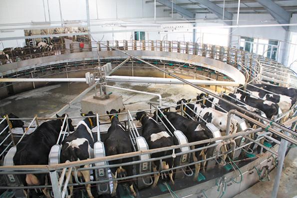 Молочная ферма ООО «Сибирская Нива»