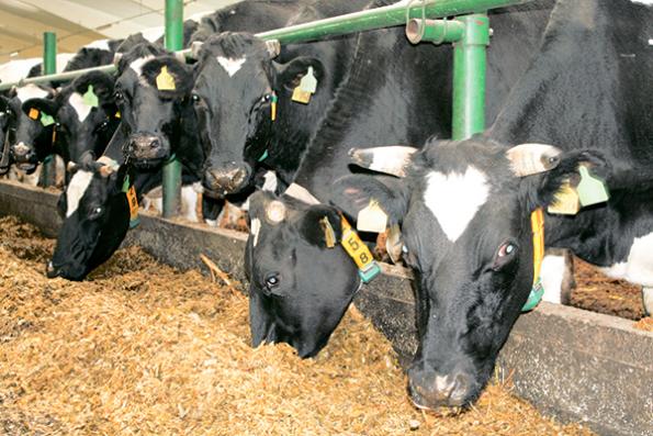 ЗАО «Шарчинское» — лидер молочного животноводства района