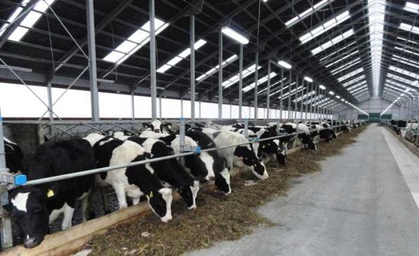 Россельхозбанк инвестирует около 19 млрд рублей в строительство молочного завода в Новосибирской области
