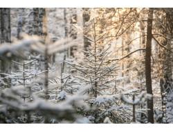 Лесовосстановительные работы на площади более пяти тысяч гектар проведены в Новосибирской области в 2017 году