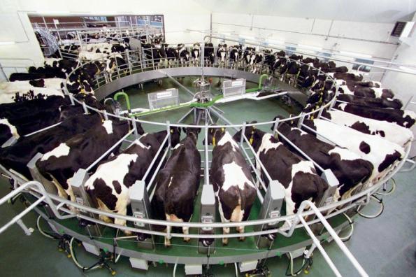 Новосибирский филиал Россельхозбанка представил комплекс мер поддержки предприятий молочной отрасли