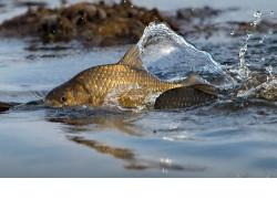 Новосибирских казаков привлекут к охране нереста рыбы