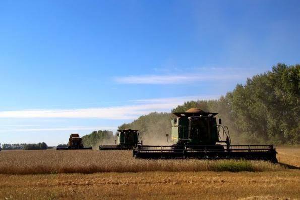 Обращение возмущенного новосибирского фермера о пошлинах на зерно: «Возьмите и компенсируйте потери мужикам»
