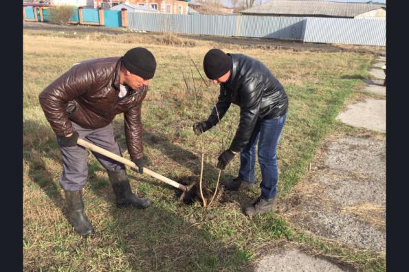 В Новосибирской области стартовала международная акция «Сад памяти»