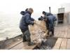 В Новосибирской области увеличился объем добычи рыбы