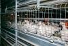 Коченёвская птицефабрика