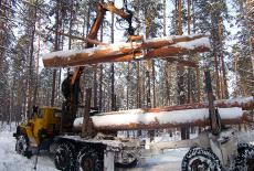 Лесной капитал региона