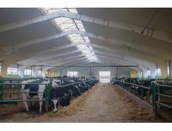 В Новосибирской области завершен перевод крупного рогатого скота на зимне-стойловое содержание