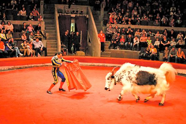 На арене новосибирского цирка