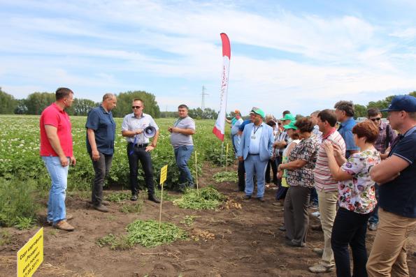 «День картофельного поля-2017» в Ордынском районе