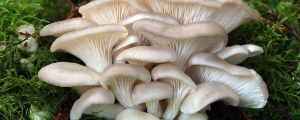 «Каково «Лукошко», таковы и грибки»
